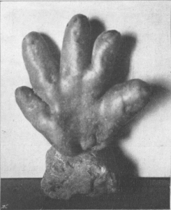 kartoffelabnormitaet-gemischtwarenhaendler-schodl-1906